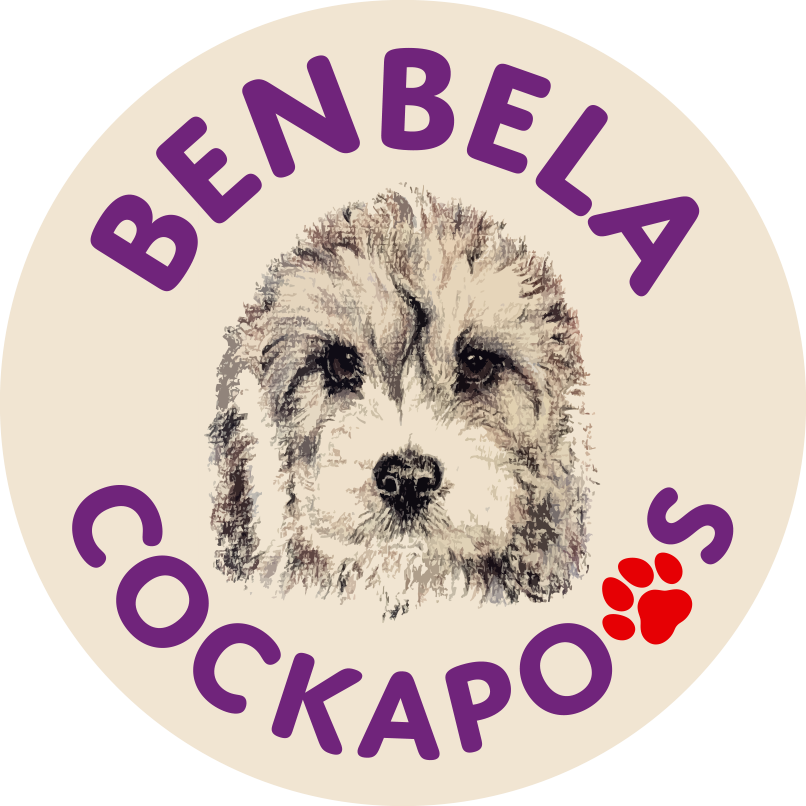 benbela dog breeder essex